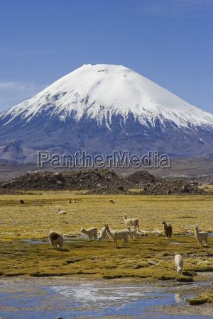 volcano parinacota