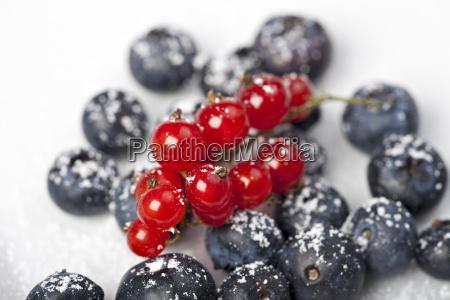 blaubeeren und rote johannisbeeren mit puderzucker