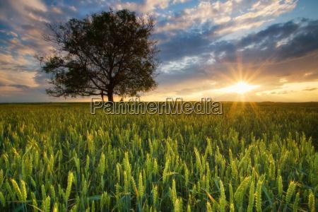 sunshine in the field
