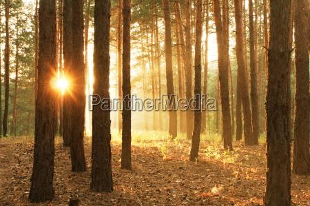 bosque del verano
