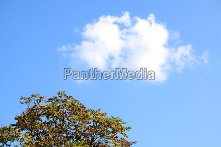 treetops and a cloud in the