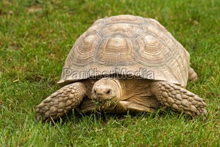 turtle during feeding