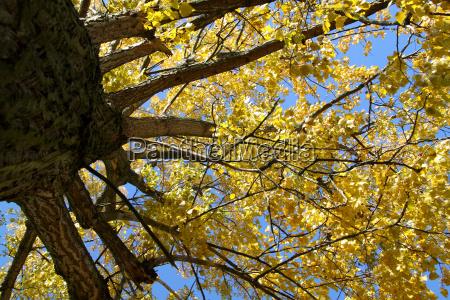 leaf tree branch bark forest leaves