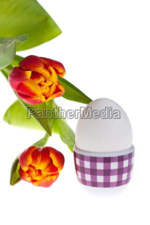 eier und tulpen im fruehling