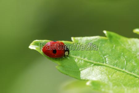 ladybug - 3189393