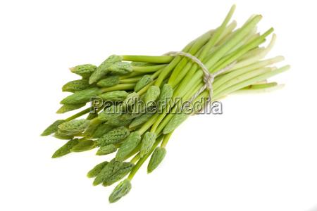 buendel vom wilden gruenen spargel