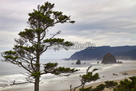 foggy morning at tolovana beach oregon