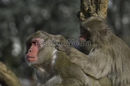 makakenpflege