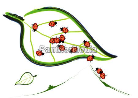 abstract beetle on leaf