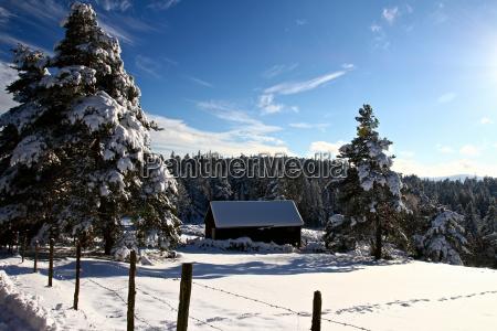 winter - 4350993