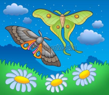 night butterflies on meadow