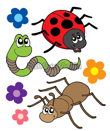 various bugs collection