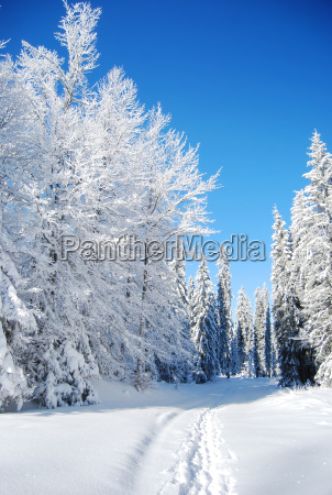 snowy, mountain, forest - 5017619