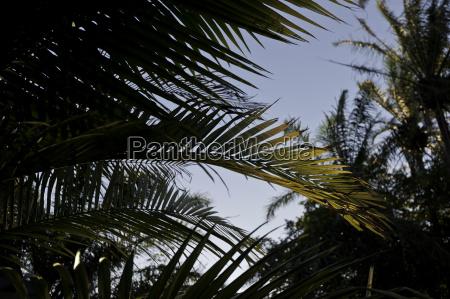 palmblatt gegenlicht alajuela costa rica orchidea