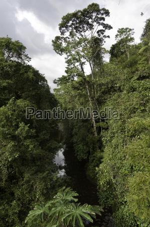 rainforest rain forest river water costarica