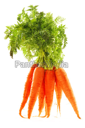 fresh carrots bunch isolated on whiet
