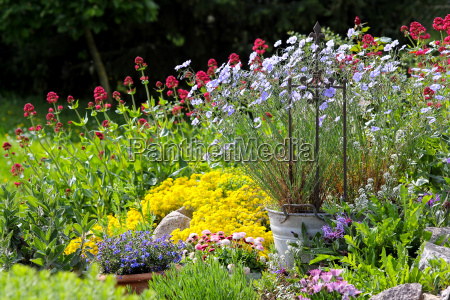 colourful blooms in the garden