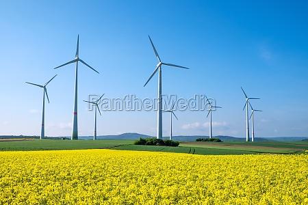 campo de colza y turbinas eolicas