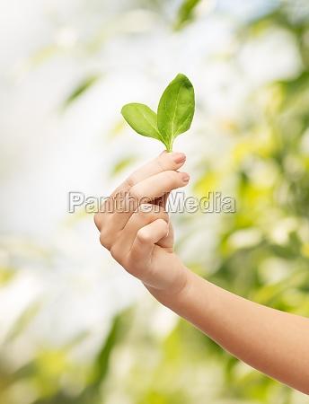 mano de la mujer con el