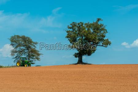 farm field with lone tree