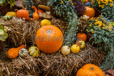 pumpkin ornament at autumn