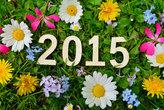 2015 jahr silvester neujahr