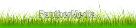 banner grass meadow