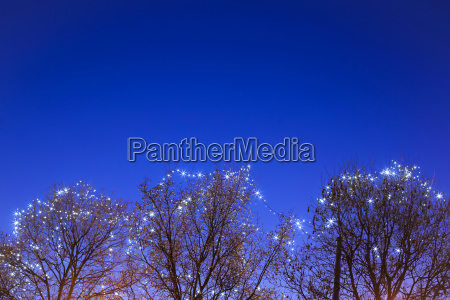 illuminated treetops at advent time