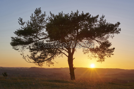 scenic view of silhouette of scots