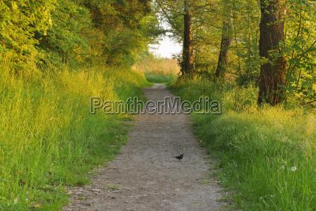 bird on path in morning in