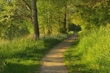 path in morning in spring niedernberg