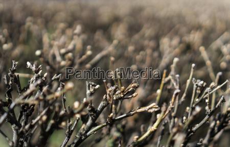 horizontal vivid brown bush branches dramatic