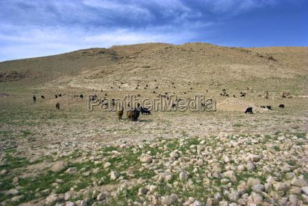 landscape near shiraz iran middle east