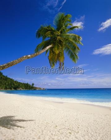 palm tree and beach seychelles