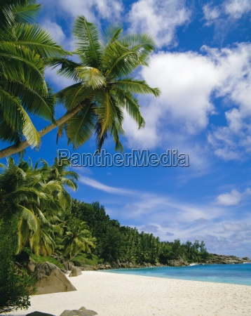 palm trees and beach seychelles