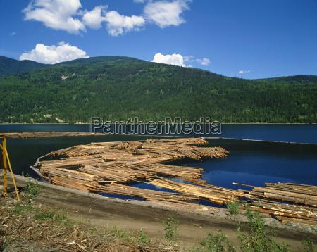 logs awaiting processing near chase british