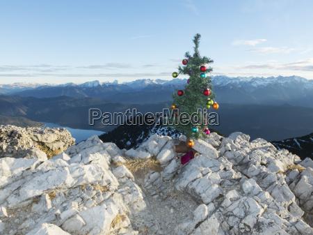 kuenstlicher weihnachtsbaum auf den herzogstand