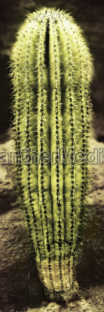 detailed view of cactus