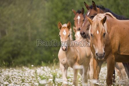 herd of horses standing in a