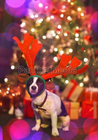 portrait cute dog wearing reindeer antlers