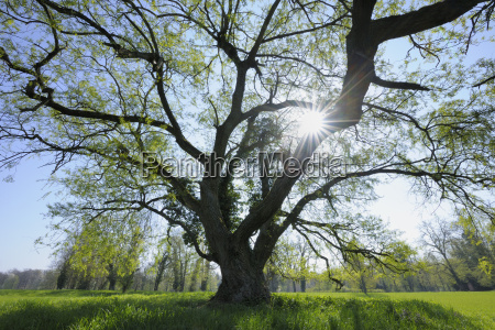 park in spring aschaffenburg bavaria germany