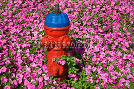 fire hydrant and pink flowers
