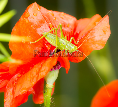 green grasshopper sitting on a red