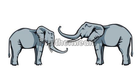 friendly elephants trust themselves