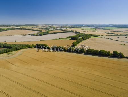 aerial view of oat crop growing