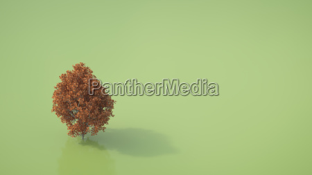 3d rendering autumnal maple tree on