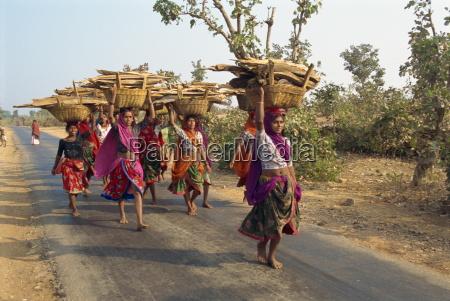 women collecting firewood near dhariyawad rajasthan