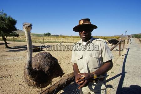 ostrich ranch tourist farm africa