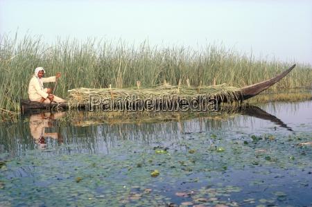 man gathering reeds mashuf boat marshes