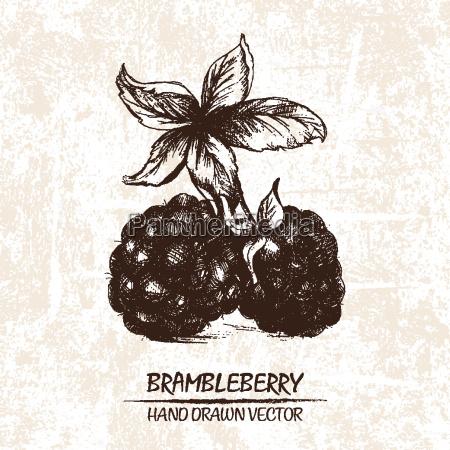 digital vector detailed brambleberry hand drawn